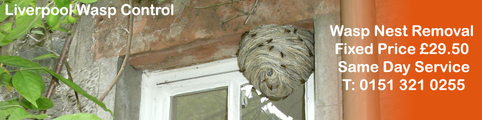 Seaforth Wasp Control - Wasp Nest Removal, fixed price £29.50, Covering Liverpool, Merseyside and Cheshire