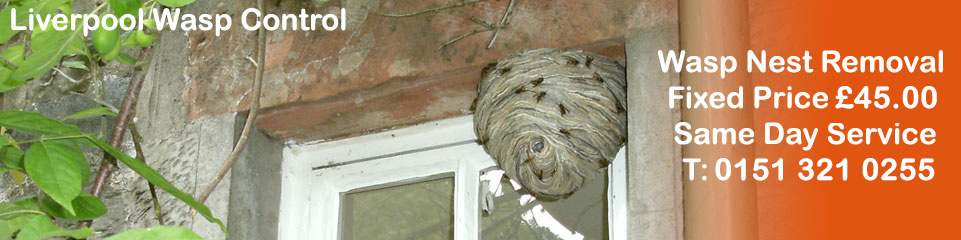 Orrell Wasp Control - Wasp Nest Removal, fixed price £35.00, Covering Liverpool, Merseyside and Cheshire