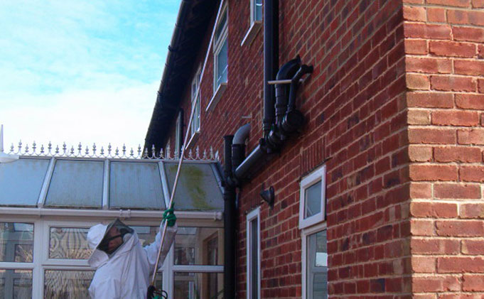 Wasp Nest Treatment in house. Orrell Wasp Control - Wasp treatment £35, covering Liverpool, Merseyside and Cheshire